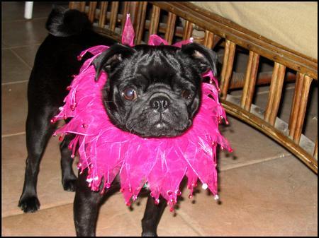 Fancy-Lola.jpg